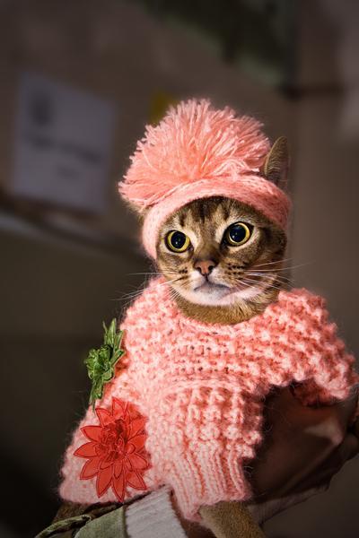 Картинка кошечки модницы